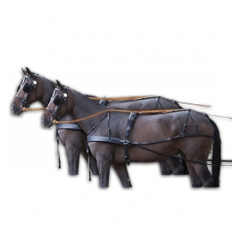 Carriage Harness for Two Horses