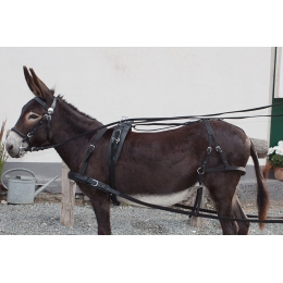 Harness Set for Donkeys, PFIFF