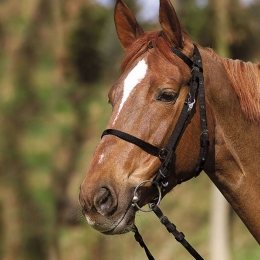 Synthetic bridle / headcollar