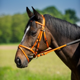 NORTON Synthetic Bridle