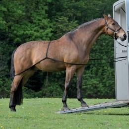 Ιμάντας Φόρτωσης Αλόγου σε Τρέιλερ