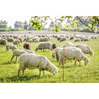 Electric fencing net for sheep and goats